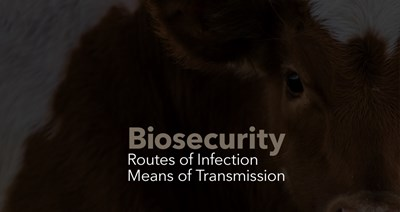 Biosecurity: Routes of Infection and Means of Transportation