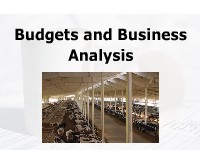 Budgets and Business Analysis