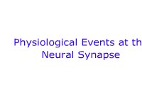 Physiological Events at the Neural Synapse