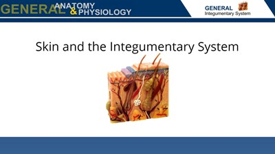 Skin and the Integumentary System