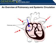 An Overview of Pulmonary and Systemic Circulation