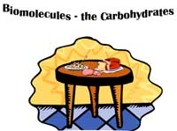 Biomolecules The Carbohydrates