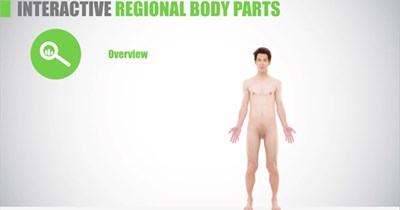 Regional Body Parts