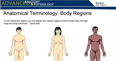 Anatomical Terminology:  Body Regions
