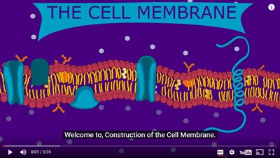 Construction of the Cell Membrane (Video)