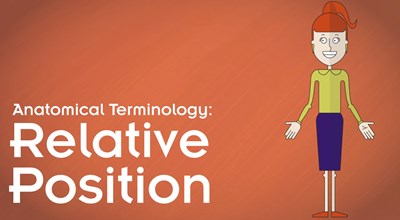 Anatomical Terminology:  Relative Position Video