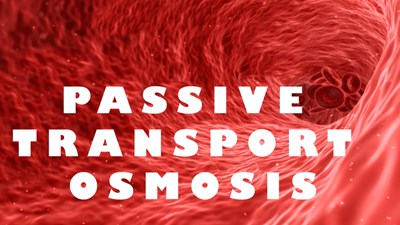 The Cell: Passive Transport Osmosis (Video)