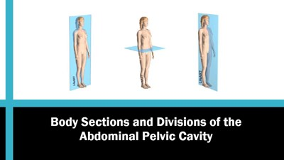Body Sections and Divisions of the Abdominal Pelvic Cavity