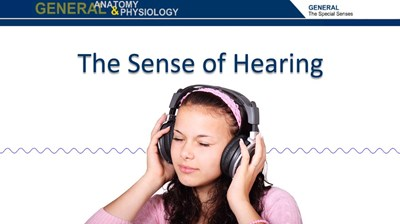 The Sense of Hearing (Screencast)