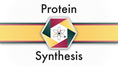 Protein Synthesis (Video)