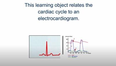 The Electrocardiogram (Screencast)