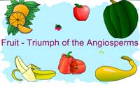 Fruit: Triumph of the Angiosperms
