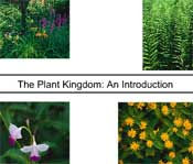 The Plant Kingdom: An Introduction