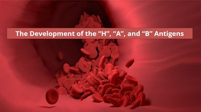"""The Summary of the Development of the """"H"""", """"A"""", and """"B"""" Antigens of the ABO System"""