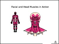 Facial and Head Muscles in Action