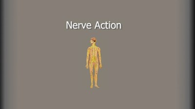 Nerve Action (Screencast)