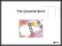 Chemical Hair Bonds: The Disulfide Bond