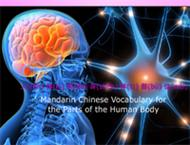 Mandarin Chinese Vocabulary for the Parts of the Human Body