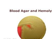 Blood Agar and Hemolysis