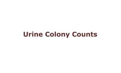 Urine Colony Counts (Screencast)