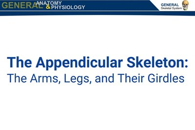 The Appendicular Skeleton (Screencast)