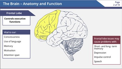 The Brain -  Anatomy and Function (Video)