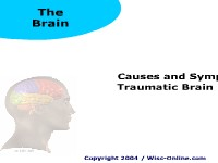 Causes and Symptoms of Traumatic Brain Injury
