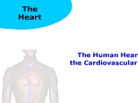 The Human Heart and the Cardiovascular System