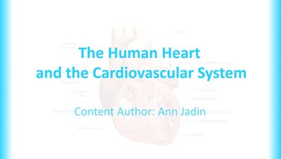 The Human Heart and the Cardiovascular System (Screencast)