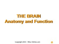 The Brain --  Anatomy and  Function